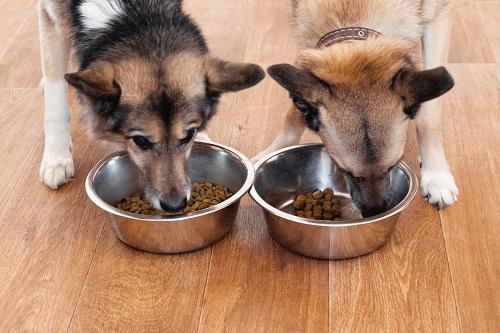 alimentation pour chien choisir